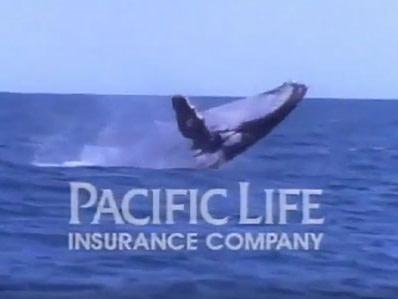 Hump back whale breaching